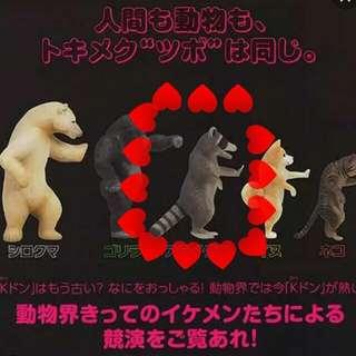 (保留)售/換扭蛋 動物壁咚系列-浣熊