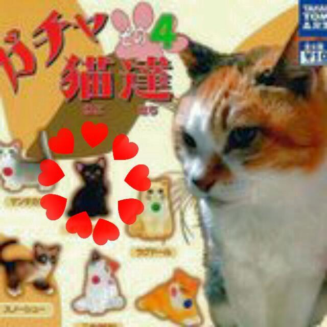 售/換扭蛋 貓達4-黑貓