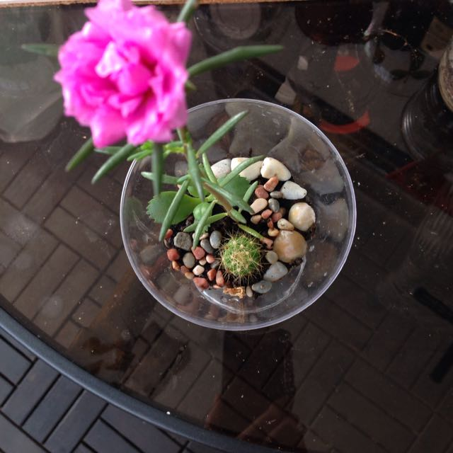 Open Terrarium In Wine Plastic Glass With 3 Plants Reduced