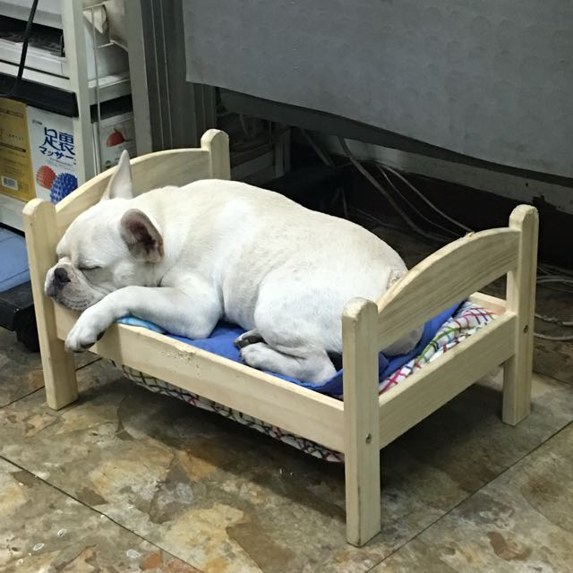 Ikea 寵物床  非常二手