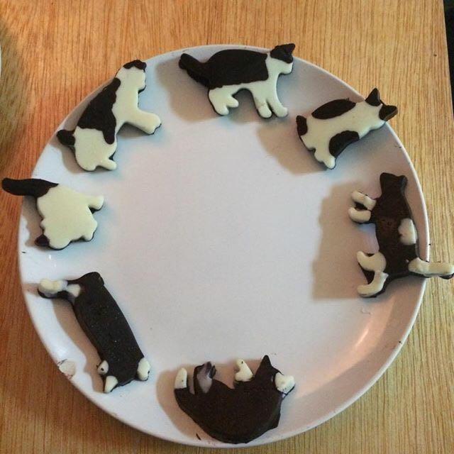 貓咪巧克力🐈