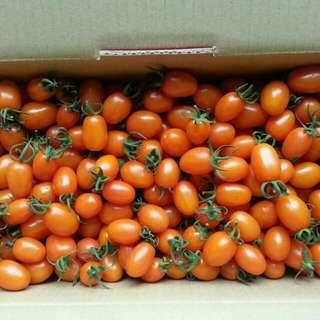 美濃橙蜜香蕃茄