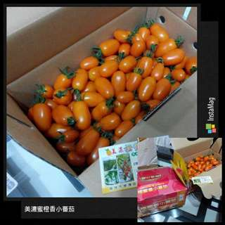美濃蜜橙香小蕃茄