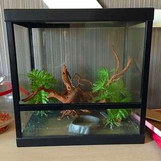 二手❤️造景缸爬蟲類龜魚蛙都可用