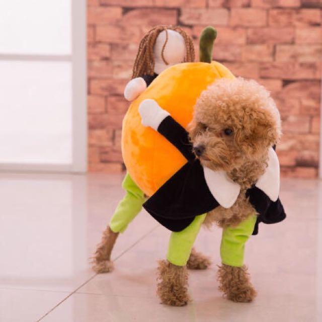 (現貨)寵物狗狗衣服 網路火紅的小幫手搬南瓜裝 過年穿新衣
