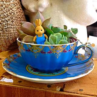 REDUCED! Wonderland In A Tea Cup