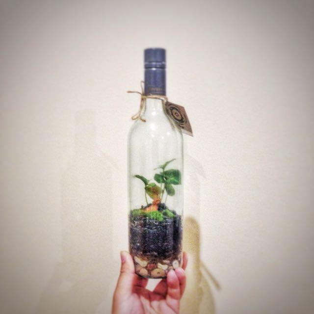 Moss Garden In a Bottle