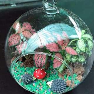 Terrarium - Mini Garden (W12.5cm-$25 / W15cm-$35)
