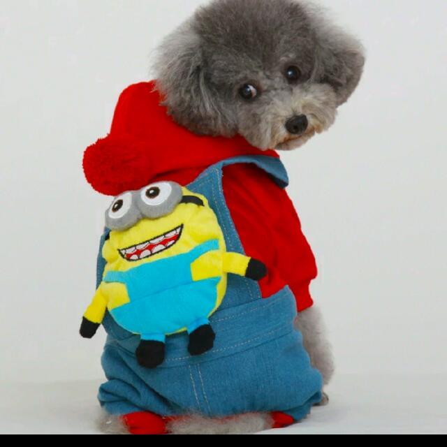 狗狗衣服 全新出售泰迪小小彬 小狗衣服比貴賓馬爾吉娃娃衣服秋冬