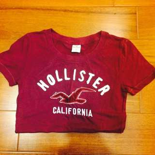 Hollister 女T 酒紅