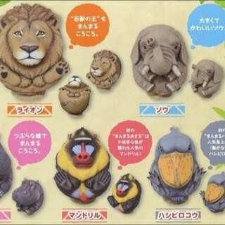 徵徵徵!圓圓動物!大象🐘