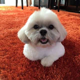 House-call Pet Grooming
