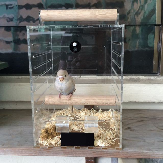 Acrylic Cage / Bird Cage, Pet Supplies on Carousell