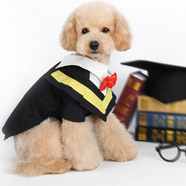 Pet Graduation Costumes Halloween Dog Costume Pet Graduation Cap