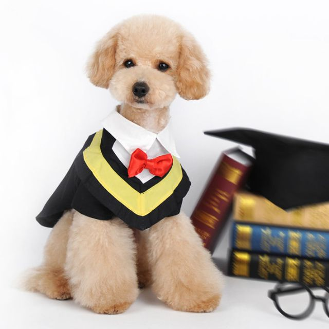graduation gown for dogs, Pet Supplies on Carousell