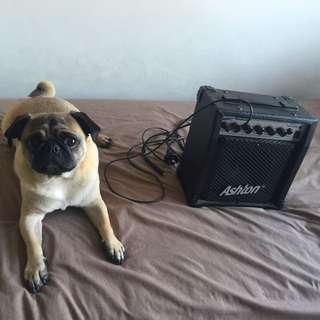 Ashton G10 Guitar Amplifier