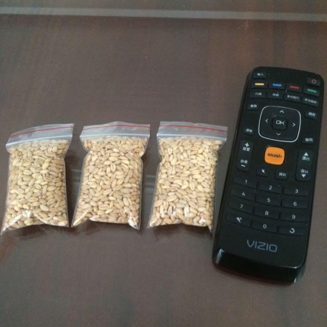(高雄免費贈送)小麥草、貓草種子