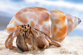 Looking to buy hermit crabs. offer me your price
