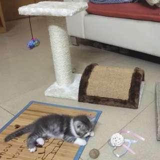 貓跳台適合小小貓