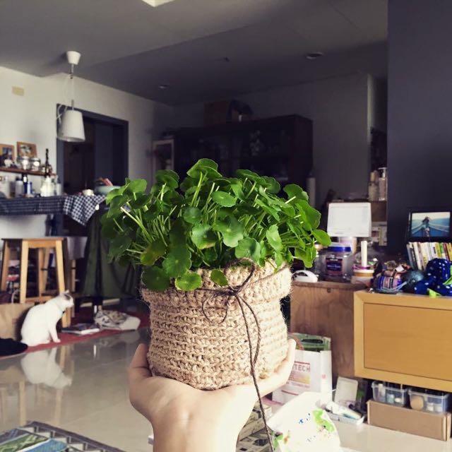 手鉤麻繩自然系療癒植栽籃