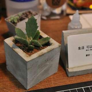 特價 水泥全手工方形盆栽