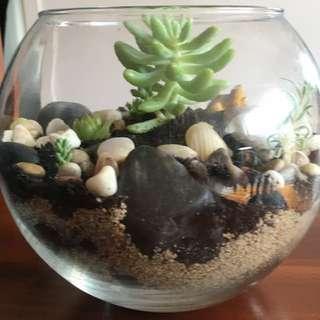 Reduced Fish Bowl Terrarium With Turtle