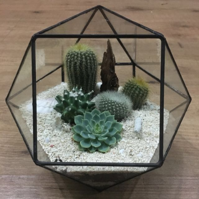 Terrarium Geometry Shape Glass