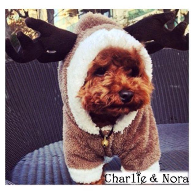 【現貨】L麋鹿變身裝寵物包暖衣