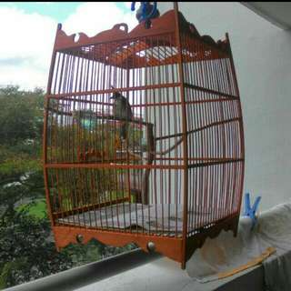 Jambul With Cage