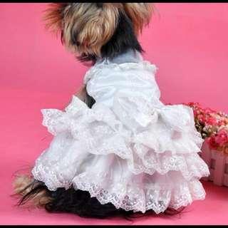 狗狗衣服 Pet Cloth