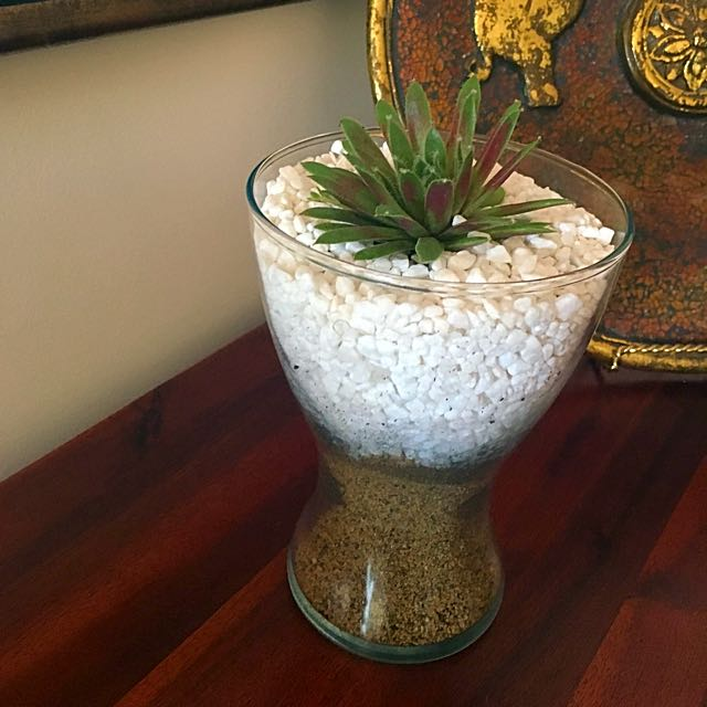 Beautiful Large Terrarium With Beautiful Two Tone Plant