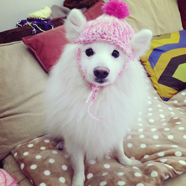 狗狗 訂製款毛帽