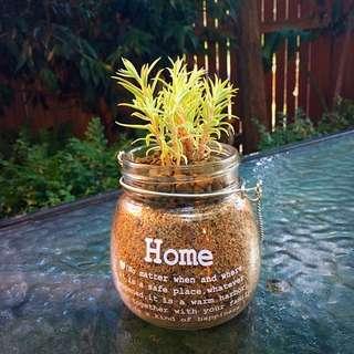Beautiful Home Printed Jar Terrarium