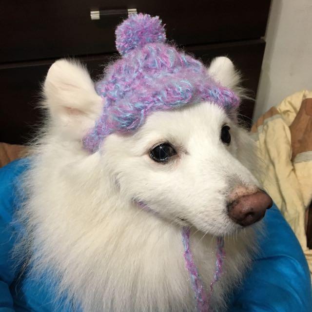 狗狗手工毛線帽