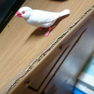 白文鳥 鳥系列 扭蛋