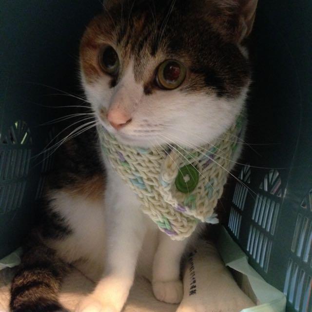 手工寵物圍巾