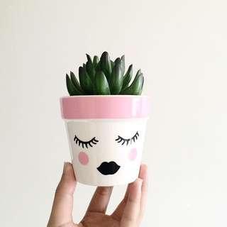Cute Fake Plant