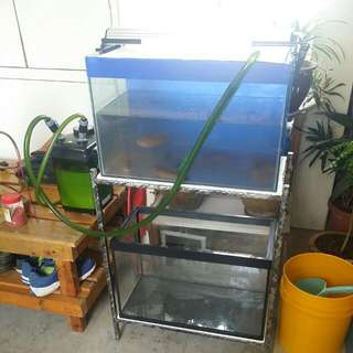 ******FREE GIVEAWAY****** 2 SET OF 2FT FISHTANK WITH STAND !!