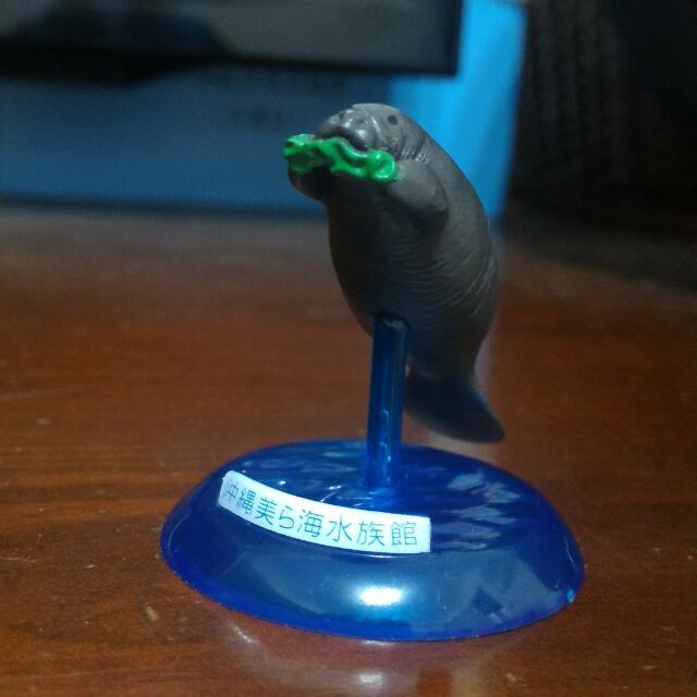 沖繩海洋水族館帶回的海牛先生!!