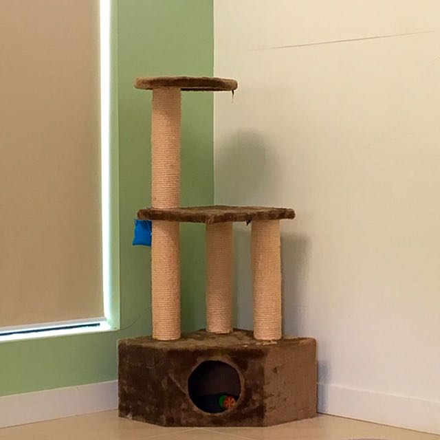 Cats Scratching Pole