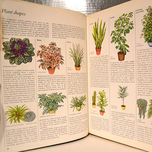 Swell Success With House Plants Readers Digest Books Interior Design Ideas Clesiryabchikinfo