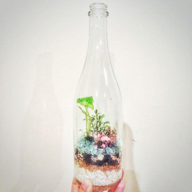 Garden Terrarium In A Wine Bottle