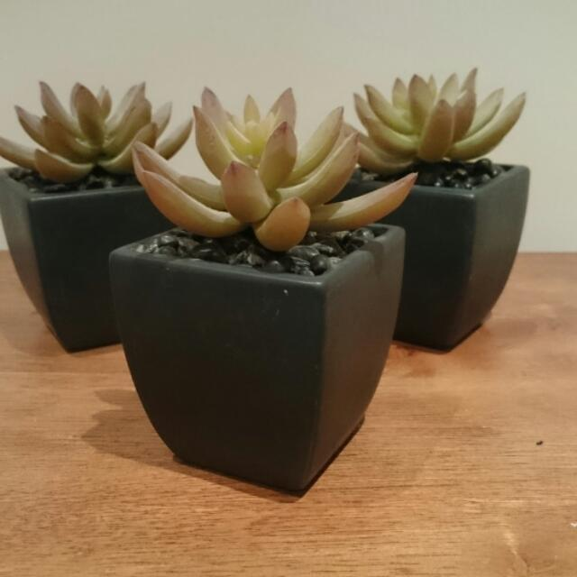 5 Imitation Succulents In Pots To Bring Life To Home Or Office