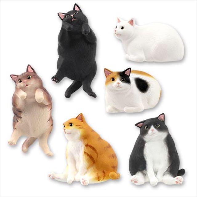 徵求 貓科 、動物 系列扭蛋 盒玩