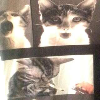 Cat Top Graphic Print