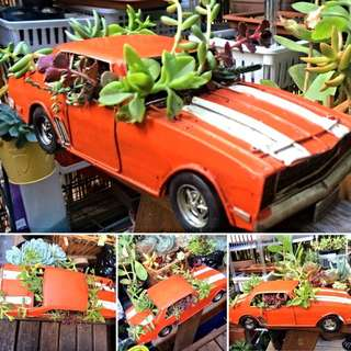 Succulent Orange Tin Car