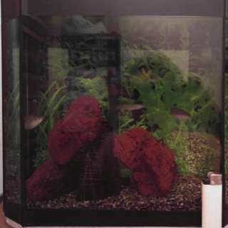 Aquarium Only