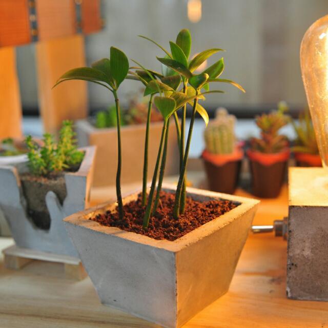 手工水泥盆栽附植栽 桌邊好配件