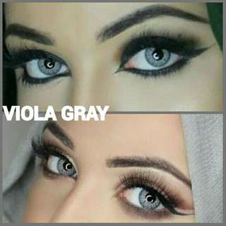 BELLA COLOR LENS | VIOLA GRAY