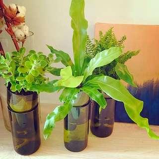 完美主義 現代養殖風 紅酒花瓶 ELEMAN 系列 法國